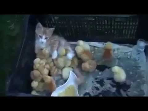 This Cat Has A Lot Of Fans!