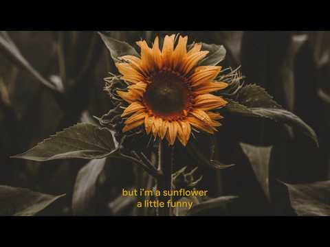 Sunflower - Sierra Burgess (Sierra Burgess Is A Loser) Lyrics