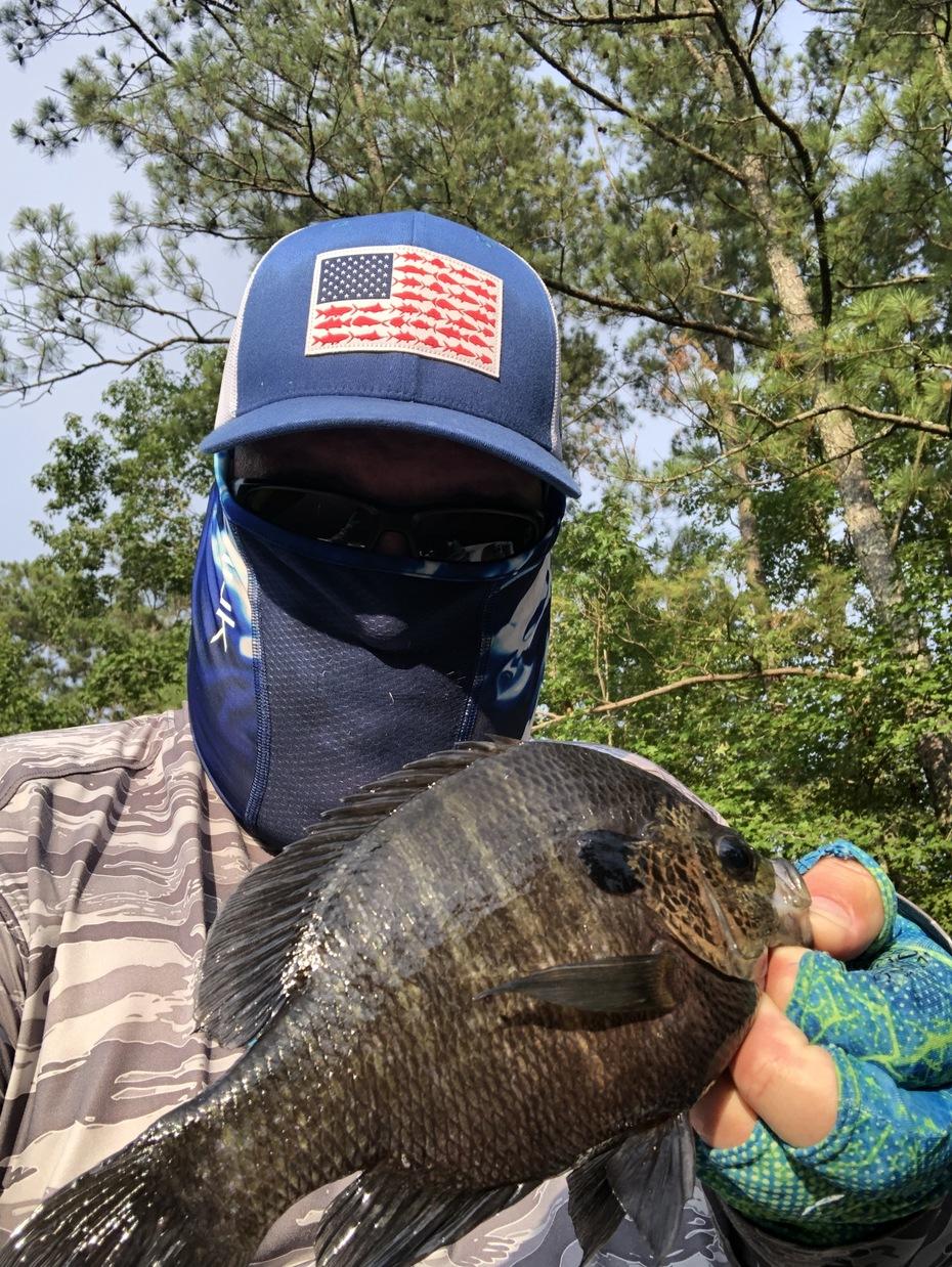 Some Quality Gills on Rebellion Creek.......7/17/2019