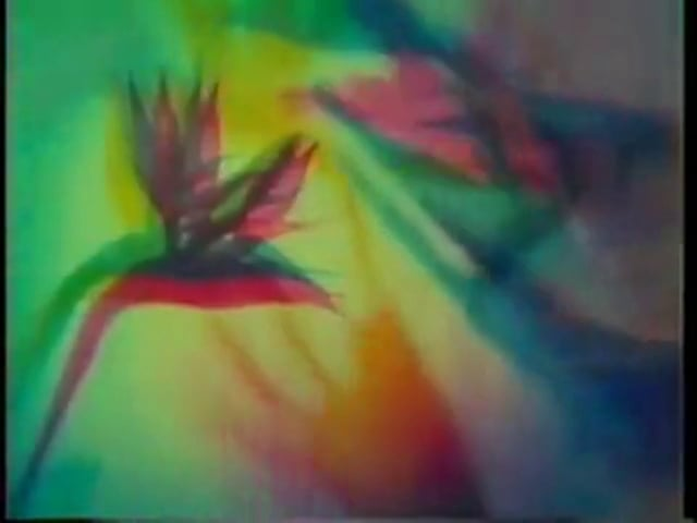 SUNDAY SHORTS #20: The Psychedelic Experience