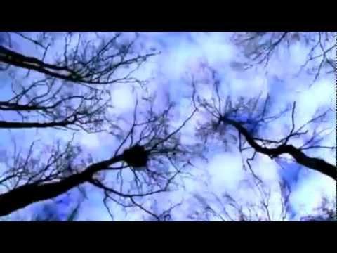 Lylac - Tree