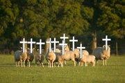 sheep_religion