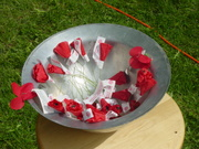 Poppies for Wis Soldiers Killed in Iraq and Afganistan