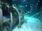 Sea Life Pictures