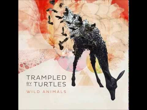 """Trampled by Turtles - """"Are You Behind the Shining Star?"""" [Audio]"""