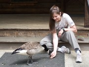 Our very tame goose