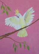 #Drawing in #Pastel Beautiful Cockatoo