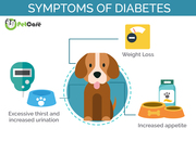 Diabetes in Dogs (5)