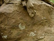 Sandstone w tree-GA-KC-PD2
