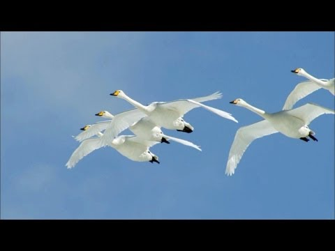 Wings to Paradise 2 of 2 1080p HD
