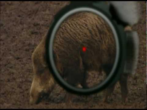 Wild boar fever 2/2