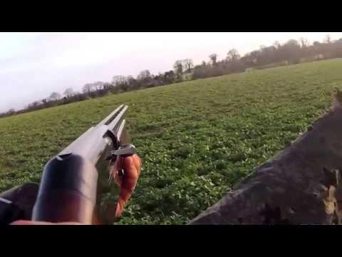 CHASSE DU PIGEON EN IRLANDE SHOOTING PIGEON IRELAND STAR IRELAND