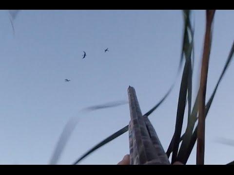 Chasse au canard: en attendant la migration