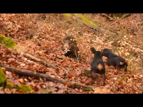 Driven Hunts Hubertus Hunting Tours  Czech Republic Slovakia