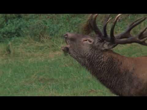 Rothirsch Jagd in der Slowakei mit St  Hubertus Hunting Tours