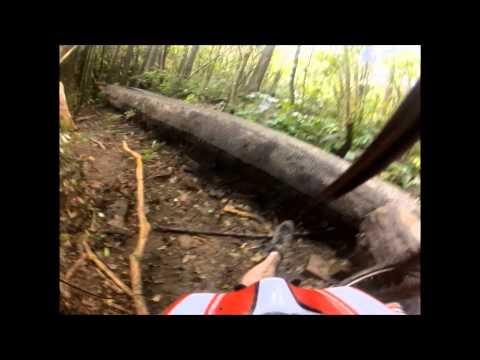 Waikari Creek Redwoods Trail