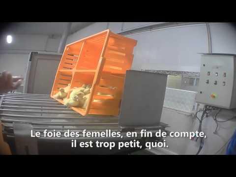 Foie gras :L'enfer n'existe pas pour les animaux, ils y sont déjà. (Victor Hugo)