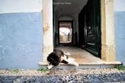 Relax in Faro [ II ]