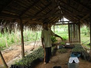 25 - Sr. José explicando o processo do plantio de mudas de ipê e jatobá