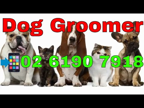 Dog Groomer Canberra | Call Now ! 02 6190 7918