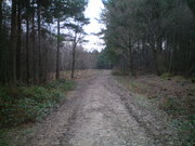 Bixley Woods