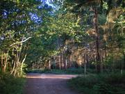 Bixley Woods