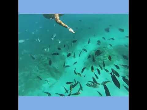 Island Giftun: Snorkeling trip from Hurghada