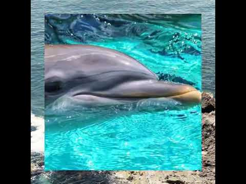 Take 9 - Hour Dolphin Snorkeling Tour from Hurghada