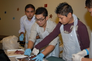Second Year Student Assisting in Dissection