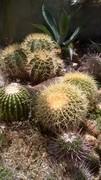 Keszthely kastélypark és pálmaház és kaktuszok.