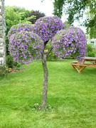 Living Tree Art - Referance Tree 9