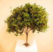 Living Tree Art - Referance Tree 19