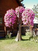 Living Tree Art - Referance Tree 4