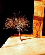 Living Tree Art - Referance Tree 34