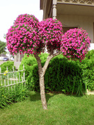 Living Tree Art - Referance Tree 2