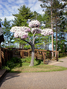 Living Tree Art - Referance Tree 33