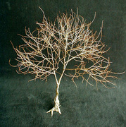 Living Tree Art - Referance Tree 31