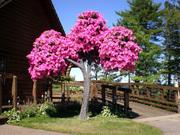 Living Tree Art - Referance Tree 24