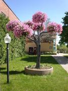 Living Tree Art - Referance Tree 5
