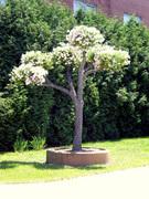 Living Tree Art - Referance Tree 17
