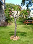 Living Tree Art - Referance Tree 1
