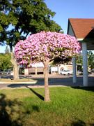 Living Tree Art - Referance Tree 3