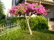 Living Tree Art - Referance Tree 6