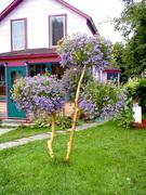 Living Tree Art - Referance Tree 10