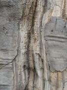 Blijdorp baobab lightning strike1