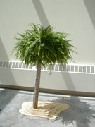 Living Tree Art - Referance Tree 21