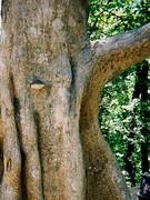 Concrete Climbing tree for Chimps
