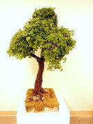 Living Tree Art - Referance Tree 18