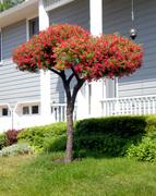 Living Tree Art - Referance Tree 8