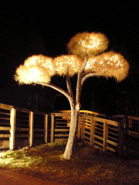 Living Tree Art - Referance Tree 29